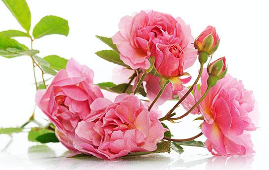 گل ایرانی، خواص ایرانی!