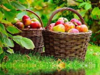 سیب از ديدگاه طب سنتی- قسمت اول