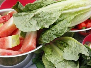 5 ماده غذایی غنی از آب