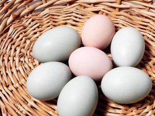 حقايقی در مورد تخم مرغ