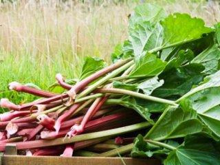 رژيم غذايی سنتی متناسب با بهار (2)