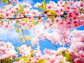 بهار، بهترين بهانه برای تغيير  غذایی (1)