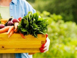 بسته موضوعی 31: تغذیه بهتر، سلامتی بیشتر