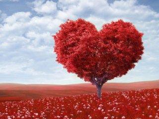 عشق حادثه نیست (1)