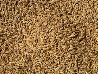 مصرف دورهای دانهها  کمک به تعادل هورمونی بانوان (2)