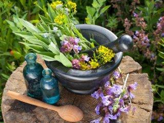 جایگاه گیاهان دارویی در برنامه غذایی (1)