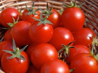 گوجه فرنگی در طب سنتی