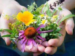 سلامت رودهها در طب سنتی- اسلامی (1)