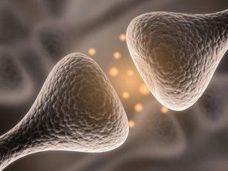 فعال شدن عصبهای دوپامین و كنترل پرخوری