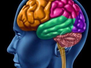 باورهای غلط در مورد تقویت مغز