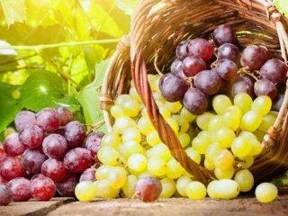 انگور؛ سرآمد میوههای بهشتی