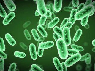 باکتریهای روده و پیش بینی واکنش بدن به غذای چرب