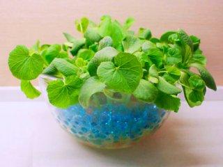 سبزه با تخمه کدو
