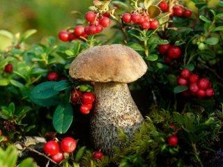 قارچهای بهاری: خطر مسمومیت در کمین ماست!
