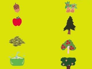 دانه ها، میوه ها و گیاهان