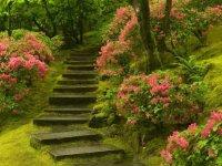 پله پله تا خوشبختی