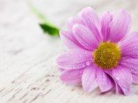در بهار امسال، گل بدهید