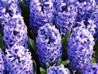 يك گل برای هفتسين (1)