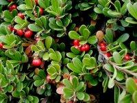 گیاهان دارویی در سفرهای نوروزی