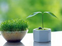 بسته موضوعی 69: آموزش انواع سبزه عید