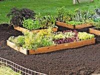 راهنمای كاشت سبزی در منزل (2)