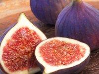 گیاه دارویی انجیر