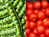 کاشت نخودفرنگی و گوجه فرنگی در منزل