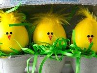 جوجه های تخم مرغی