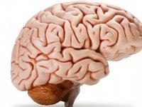 از شگفتی های مغز ما