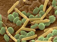 چگونه با تغذیه از عفونت پیشگیری کنیم؟