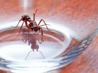 پیشخدمت! در لیوان من مورچه است