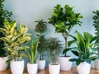 گیاهان تصفیه کننده هوای خانه به توصیه ناسا