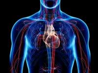 بهبود سیستم گردش خون