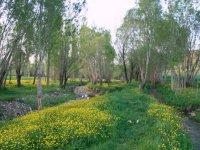 سفر به خنک ترین مناطق ایران در گرم ترین فصل سال