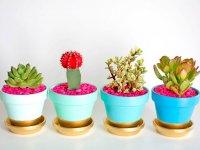 از گل های طبیعی چگونه در دکوراسیون خانه استفاده کنیم؟