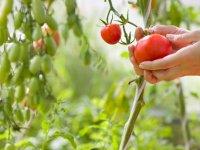 کشاورزی ارگانیک چیست؟