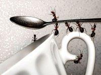 از بین بردن مورچه در خانه با چند روش غیر سمی