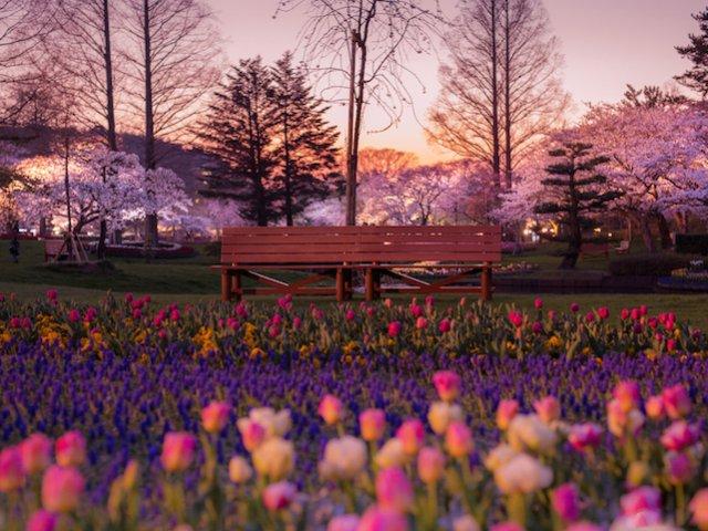 آرامش شاعرانه طبیعت ژاپن
