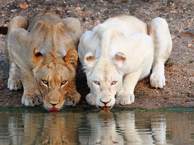 حیوانات زال
