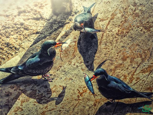 عکس پرسنلی حیوانات