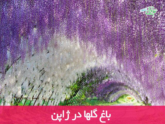 پارک گلها در ژاپن