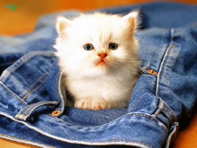تصاویر دیدنی از بچه گربه ها