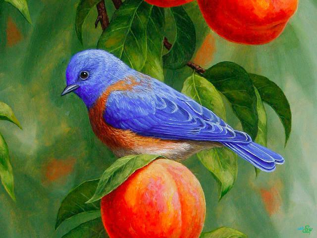 متن حقوقی زیبا نقاشی های زیبا از پرندگان