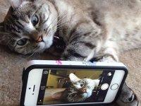 معروف ترین گربه اینستاگرام