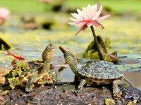 عکس هایی جذاب از دنیای لاک پشت ها