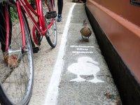 خط کشی خیابان برای عبور اردک ها در لندن