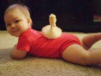 اردک همراه