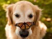 هم نشینی پروانه با دیگر حیوانات