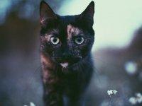 گربه و تابستان