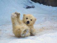 خرس قطبی و بچه خرس